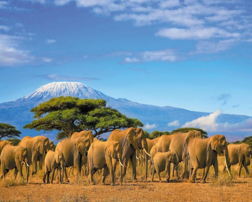 Tourisme au Kenya : comment se rendre dans le pays ?